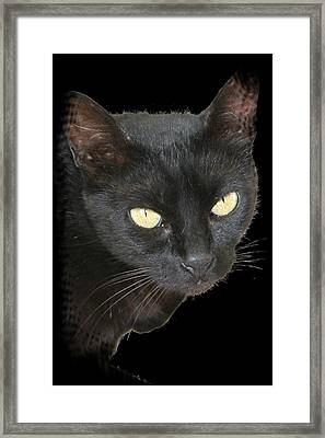 Black Cat Isolated On Black Background Framed Print by Tracey Harrington-Simpson
