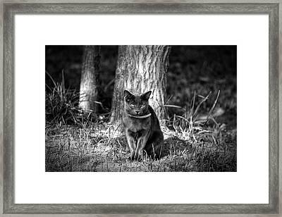 Black Cat Framed Print by Jerome Lynch