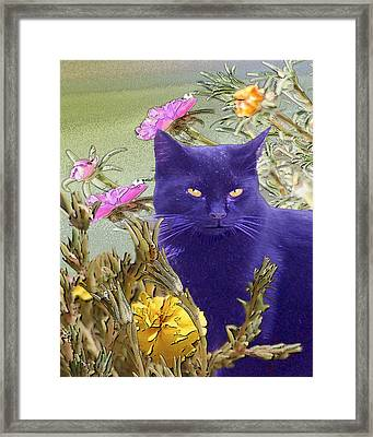 Black Cat Lurking In The Portulaca Framed Print