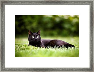 Black Cat Lying In Garden Framed Print