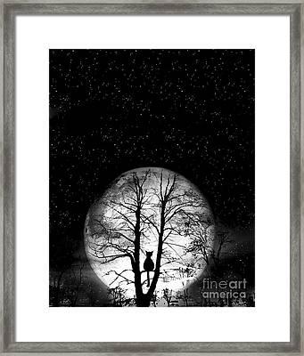 Black Cat On Tree Framed Print