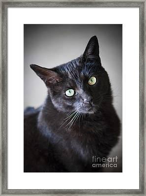 Black Cat Portrait Framed Print by Elena Elisseeva