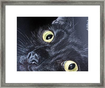 Black Cat Framed Print by Sara DeForge