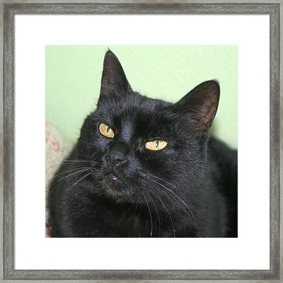 Black Cat Framed Print by Tracey Harrington-Simpson