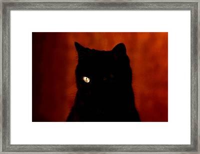 Black Cat - Yellow Eye Framed Print by Robert  Rodvik