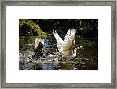 Black Chases White Framed Print