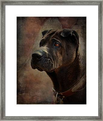 Black Chinese Shar-pei Framed Print by Terry Fleckney