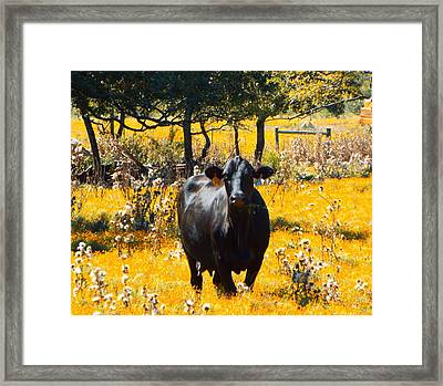 Black Cow And Field Flowers Framed Print