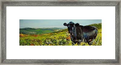 Black Cow Dartmoor Framed Print