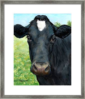Black Cow With Star Framed Print by Dottie Dracos