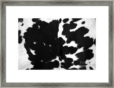 Framed Print featuring the photograph Black Cowhide by Gunter Nezhoda