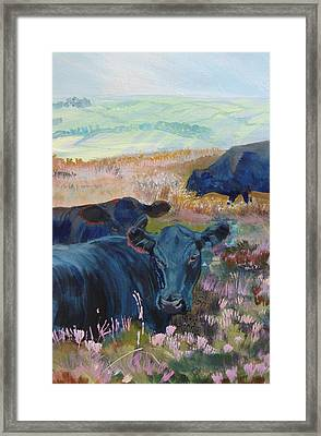 Black Cows On Dartmoor Framed Print