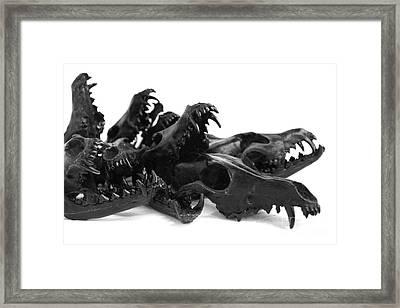 Black Coyote Skulls Set 2 Framed Print by Marilee Spencer