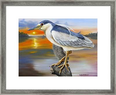 Black Crowned Night Heron At The Jordan Framed Print
