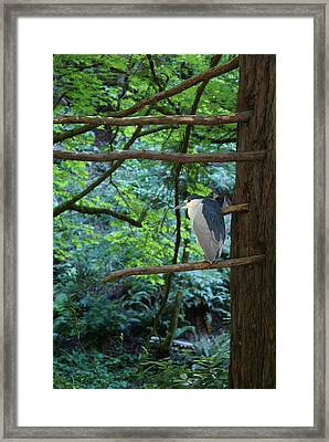 Framed Print featuring the photograph Black-crowned Night Heron by Ben Upham III