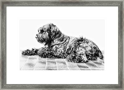 Black Dog Framed Print by Andrei SKY
