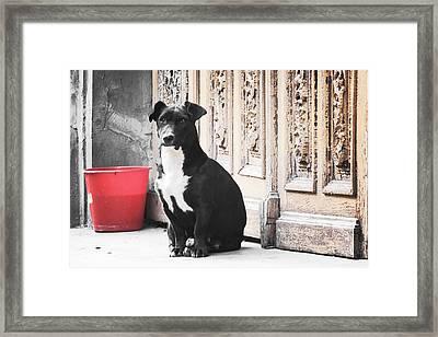 Black Dog Guarding A Vintage Wooden Door Framed Print