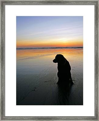 Black Dog Sundown Framed Print by Pamela Patch