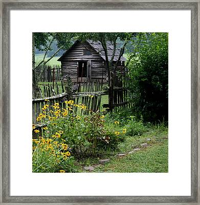 Black-eyed Susans Framed Print by Cathy Harper