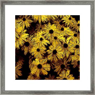 Black-eyed Susan 2 Framed Print