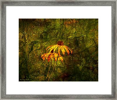 Black-eyed Susan Abstract Framed Print by J Larry Walker