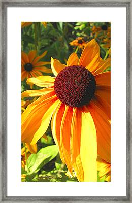 Framed Print featuring the photograph Black-eyed Susan In Your Face by Brooks Garten Hauschild