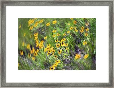 Black-eyed Susan Flowers Framed Print by Jim West