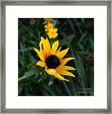 Framed Print featuring the photograph Black-eyed Susan Glows With Cheer by Luther Fine Art