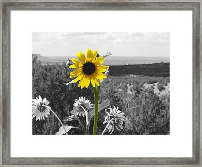 Framed Print featuring the photograph Black-eyed Susan by Tom DiFrancesca