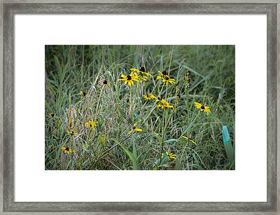 Black Eyed Susans At Antietam Maryland Framed Print by Bill Cannon