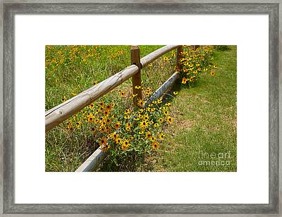Black Eyed Susans In A Wildflower Meadow Framed Print by Louise Heusinkveld
