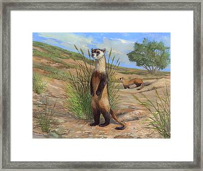 Black-footed Ferret Framed Print by ACE Coinage painting by Michael Rothman