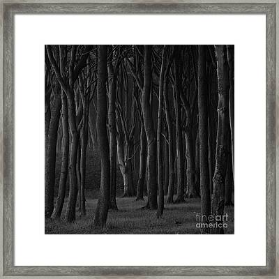 Black Forest Framed Print by Heiko Koehrer-Wagner