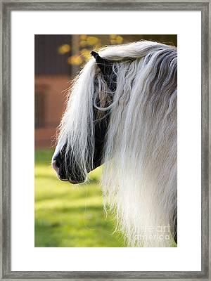 Black Forest Horse Framed Print