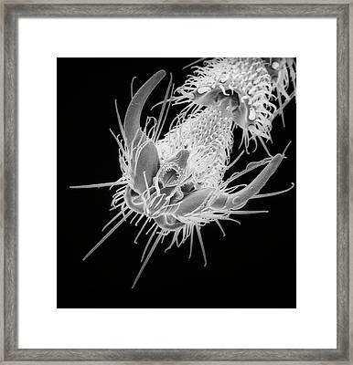 Black Garden Ant Framed Print by Natural History Museum, London