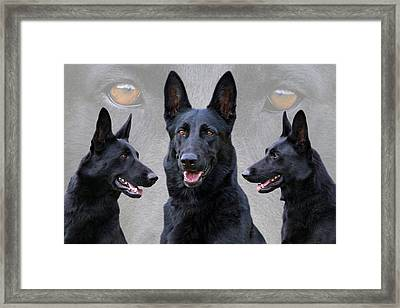 Black German Shepherd Dog Collage Framed Print by Sandy Keeton