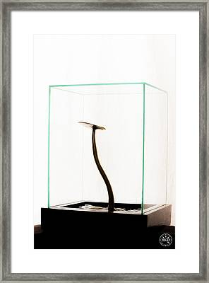 Black Gold Lily Framed Print by Yevgeni Kacnelson