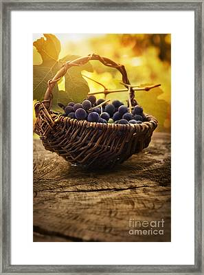 Black Grapes Framed Print by Mythja  Photography