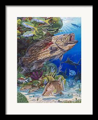 Nassau Grouper Framed Prints