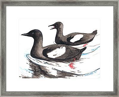 Black Guillemot Framed Print