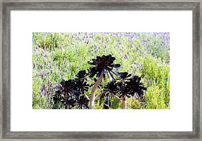 Black Heart Framed Print