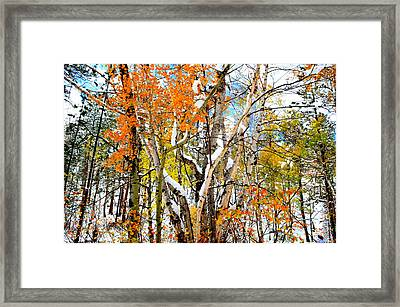 Black Hills Entanglement Framed Print