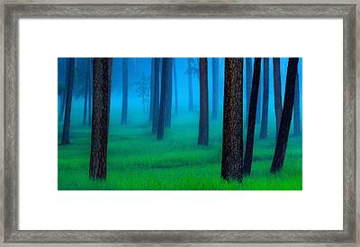 Black Hills Forest Framed Print