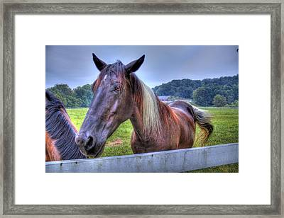 Black Horse At A Fence Framed Print by Jonny D