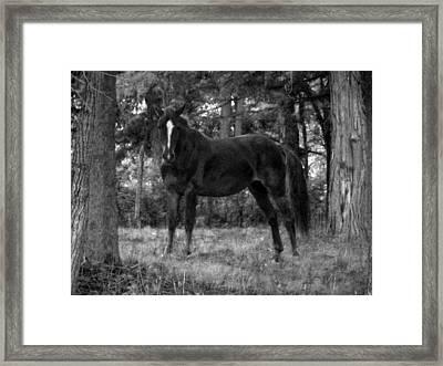Black Horse Framed Print by Joyce  Wasser