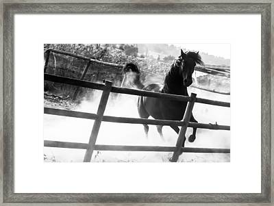 Black Horse Looking At Me Framed Print by Filomena Francisco