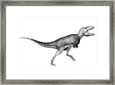 Black Ink Drawing Of Bistahieversor Framed Print by Vladimir Nikolov