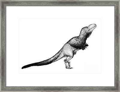 Black Ink Drawing Of Daspletosaurus Framed Print