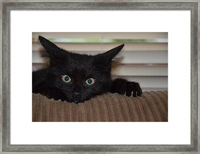 Black Kitten Framed Print