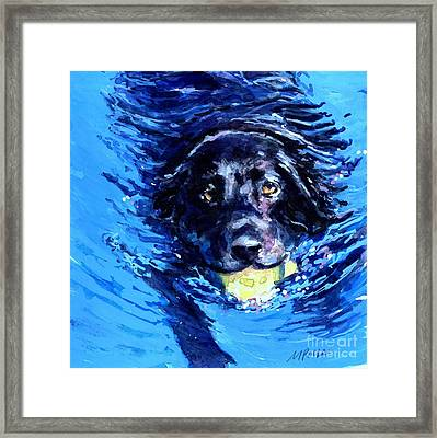 Black Lab  Blue Wake Framed Print by Molly Poole